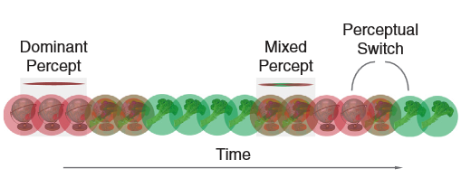 Figure 1. Example of binocular rivalry when one eye sees the green image and the other the red. From Robertson et al. 2016.